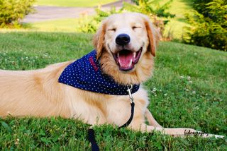 Just look how happy Gideon is about HIS new bandana!