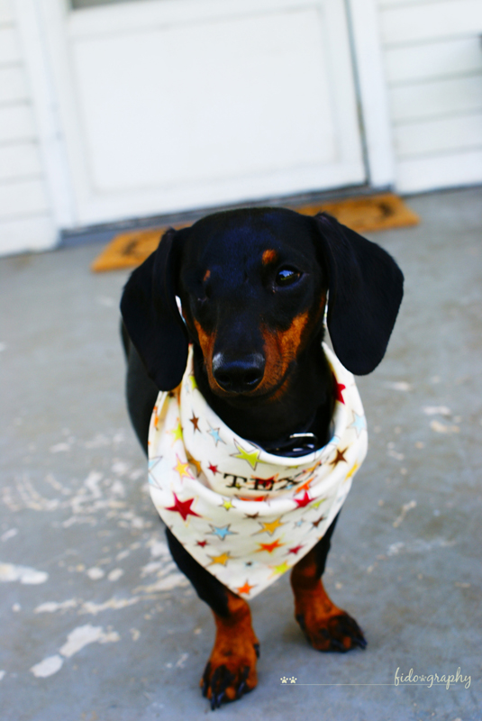 TexasBandana